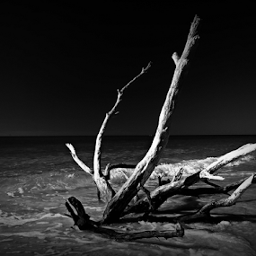 Drfitwood by Jeremy Barton - Landscapes Beaches ( driftwood, wood, florida, waves, sea, ocean, beach )