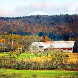 The Old Farm by Papa Reg - Landscapes Prairies, Meadows & Fields ( field, farm, barn, trees, house )