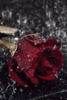 Screenshot of Rain On Red Rose Live Wallpape