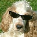 Yeah Dog! icon