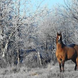 by Janken 919 - Landscapes Prairies, Meadows & Fields