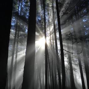 Misty Mountain Morning by Ian McAdie - Landscapes Sunsets & Sunrises ( haze, mountain, park, maple ridge, forest, naturesky, landscape, vancouver, sun, parkbc, nature, fog, beam, sunbeam, mist )