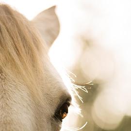 magical eye by Walter Evans - Animals Horses ( exposure, equine, eyelashes, green, horse, white, bridel, bokeh, brown eyes, tree, trees, brown, hair, light, eye,  )