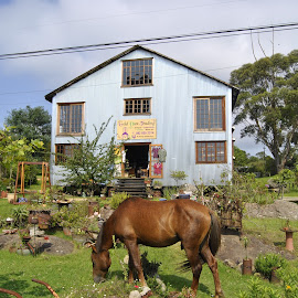 wild horse in Kaapsehoop by Joss Van Der Linde - Novices Only Wildlife ( horses, town )
