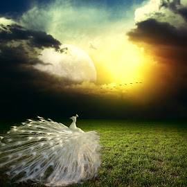 PURE BUTY by Nikos Apelaths - Digital Art Animals ( clouds, fantasy, pure, moon, white, sun )