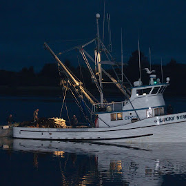 by Mark Ahrens - Transportation Boats ( sainer, reflection, humboldt bay, fishing, humboldt, boat, squid )