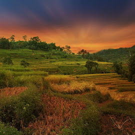 by iD 's - Landscapes Prairies, Meadows & Fields