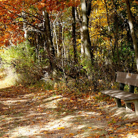 Bench by Leo Padilla - Landscapes Prairies, Meadows & Fields ( fall, color, colorful, nature )