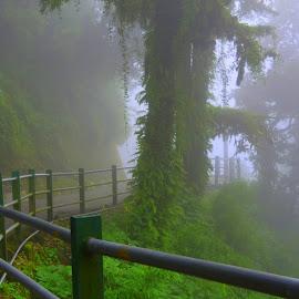 Walking through the dense foggy jungle solely by Kiran Bisht - Landscapes Mountains & Hills ( path, nature, landscape )