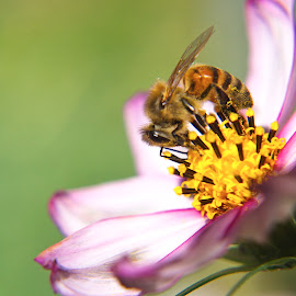 beesiness by Charles Saunders - Nature Up Close Gardens & Produce ( cool, bee, chuck, colorado, flower )