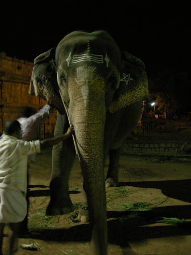 Brihadishwara temple Thanjavur temple elephant