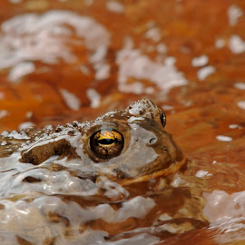 by Nick Penzel - Animals Amphibians
