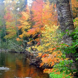 by John McFaul - Landscapes Forests ( wisconsin, north woods, autumn leaves, color, scenic riverway )