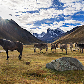 Lonely by Bar Artzi - Animals Horses ( huayhuash, traveling, nature, peru, landscape, trek )