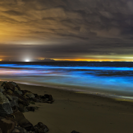 Glowing Sea by Clive Wright - Landscapes Waterscapes ( water, luminescence, bio, blue, wave, sea, ocean, glow )