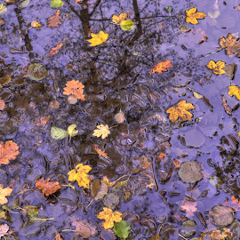 by Zeljko Kliska - Nature Up Close Leaves & Grasses ( autumn, leaves )