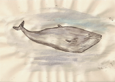 a study of whales Cetology is a scientific discipline that is centred on the study of whales, dolphins  and porpoises centuries ago, naturalists were interested in the behaviour and.