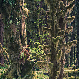 Deep in the Rain Forest by Brent Morris - Landscapes Forests