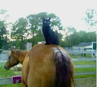 horsekitty2