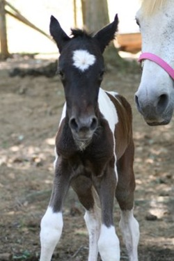 new filly3