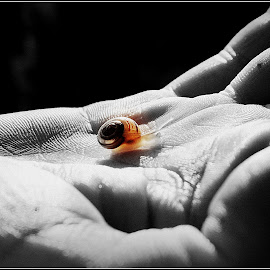 by Lucyna Zygmunt - Animals Sea Creatures