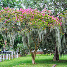 New Bern Cemetery by John Goff - Landscapes Travel ( sunrise, new bern )