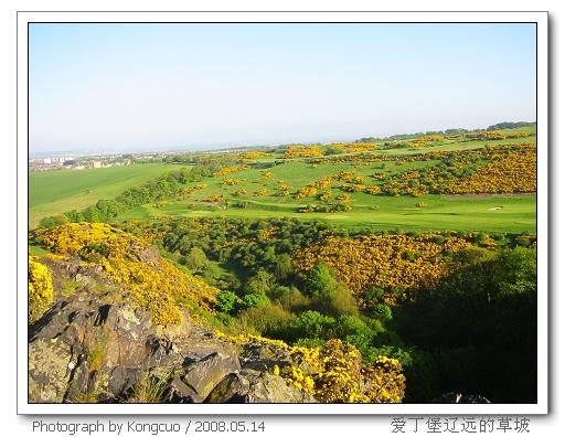 爱丁堡-草坡-黄花