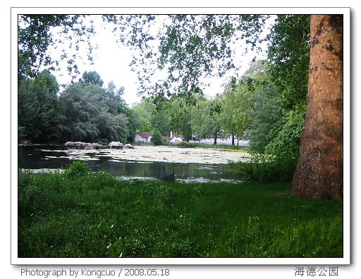 海德公园内古木参天