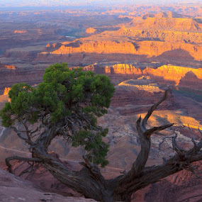 Sunrise over Dead Horse Point by Flavio Mini - Landscapes Deserts ( utah, dead horse point, canyon, sunrise, dessert,  )