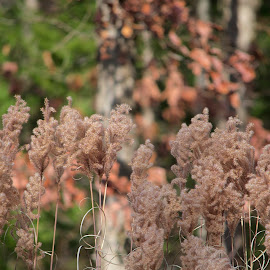 by Kathy Filipovich - Nature Up Close Leaves & Grasses