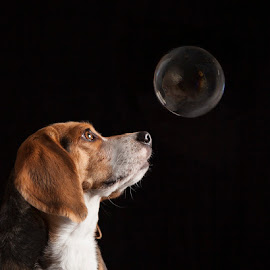 Bubbles  by Fetina Petch - Animals - Dogs Portraits