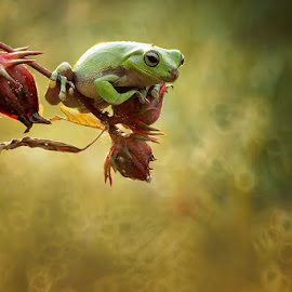 a frog  by A Rahman - Animals Amphibians