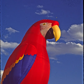 Giant parrot hot air balloon by Walter Carlson - Transportation Other ( hot air, red, feseteival, albuquerque, parrot, balloon )