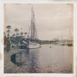 by Suzana Dordea - Instagram & Mobile iPhone ( water, old, harbour, trees, sea, boat )