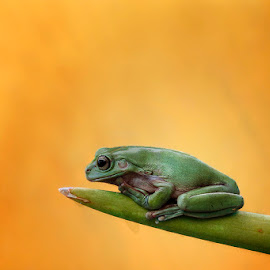 alone by Alonk's Roby - Animals Amphibians