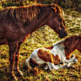 mom n baby by Nick Stevenson - Animals Horses (  )