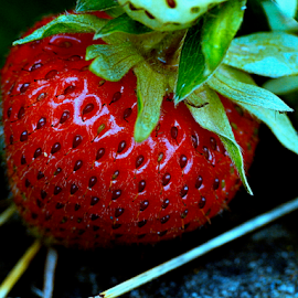 Ripe by James Cox - Food & Drink Fruits & Vegetables ( macro, red, close up, strawberry,  )