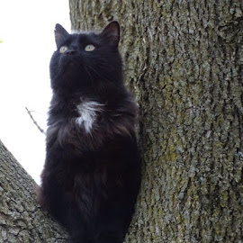 Kiddles climbs a tree by Theresa Campbell - Novices Only Pets