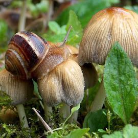 by Olja S - Nature Up Close Mushrooms & Fungi (  )