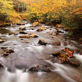 Smoky Mountain fall colors by Mili Shrivastava - Landscapes Waterscapes ( fall colors, waterscape, creek, smoky  mountain,  )