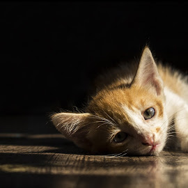 Waiting for mumma by Sanket Kalgaonkar - Animals - Cats Kittens ( sankya, rahul, rushya, suhas, urchi, sandy, #GARYFONGPETS, #SHOWUSYOURPETS,  )