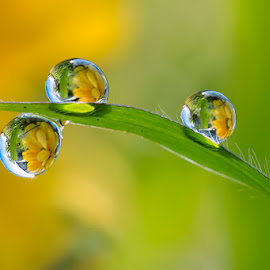 Flowers in the grass by Citra Hernadi - Nature Up Close Natural Waterdrops