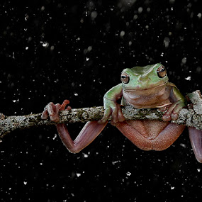 WINTER by Alonk's Roby - Animals Amphibians