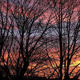Morgenrot am Weihnachtstag by Darka .... - Nature Up Close Trees & Bushes ( sky, darka, colors, trees )