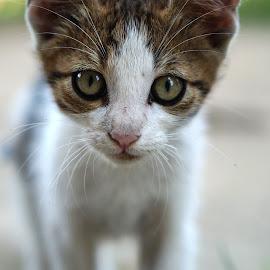 pisic de biserica by Vechituri Din Pod - Animals - Cats Kittens (  )