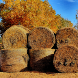Hay Bales by Terry Ricks - Landscapes Prairies, Meadows & Fields ( field, hay bales, fall, hay, fall colors.colorado, fields )