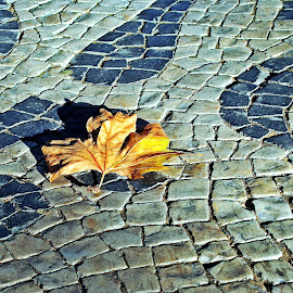 The streets of Lisboa by Migolatiev Marianna - Nature Up Close Leaves & Grasses ( fall, color, colorful, nature,  )