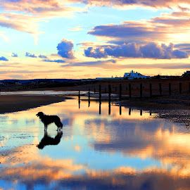 The last summer evenings walk of the year by Gareth Evans - Landscapes Sunsets & Sunrises ( clouds, collie, sunset, beach, dog )