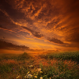 Waiting for the Day to Begin by Phil Koch - Landscapes Prairies, Meadows & Fields ( vertical, leaves, storm, photooftheday, wicounties, love, sky, barn, nature, tree, bestoftheday, weather, flower, follow, instagood, twilight, horizon, trees, floral, abandoned, decay, wisconsin, ray, chaser, landscape, phil koch, spring, sun, photography, farm, vines, horizons, clouds, park, green, scenic, silo, shadows, wild flowers, field, picoftheday, red, blue, fog, sunset, meadow, landscapephotography, beam, sunrise, landscapes, mist )
