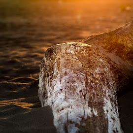 Panj by Sead Kazija - Nature Up Close Sand